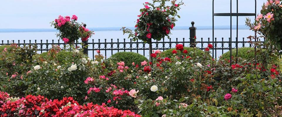 Rose Garden to help patients understand that with care and correct nutrition, they too can have top health